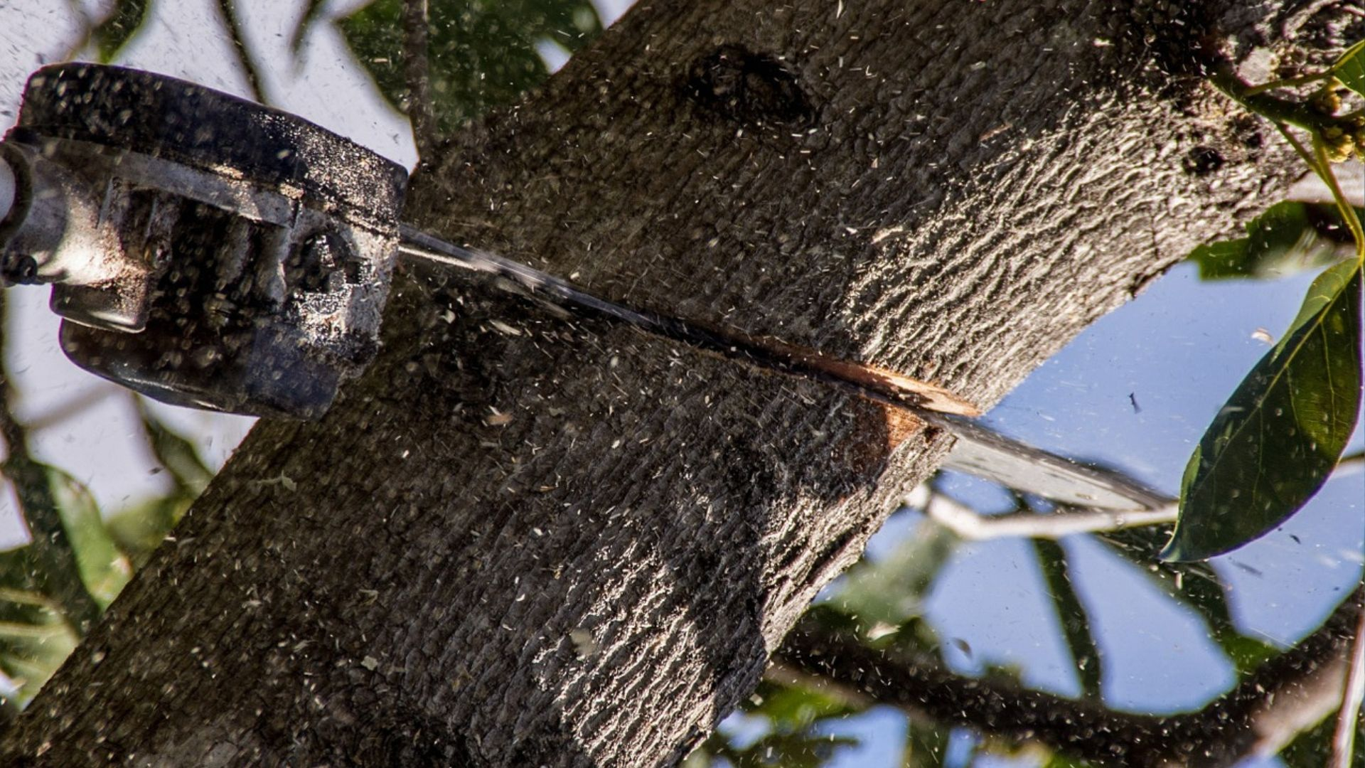 Tree Care: Three Simple Tips