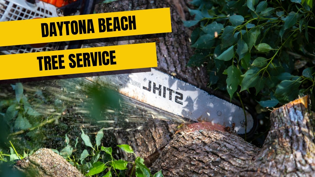 Daytona Beach tree service