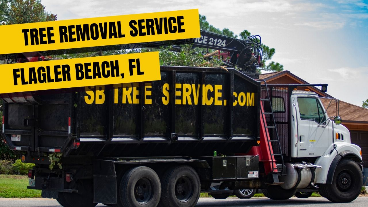 Tree Removal Service In Flagler Beach