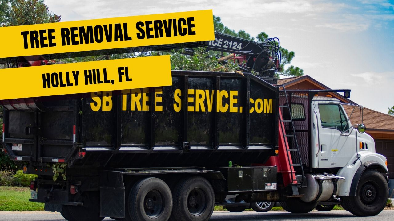 Tree Removal Service In Holly Hill