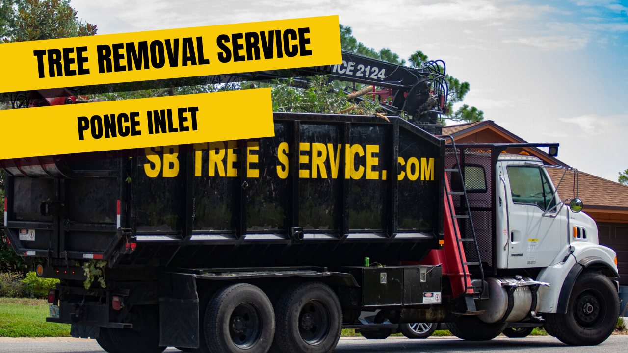 Tree Removal Service In Ponce Inlet