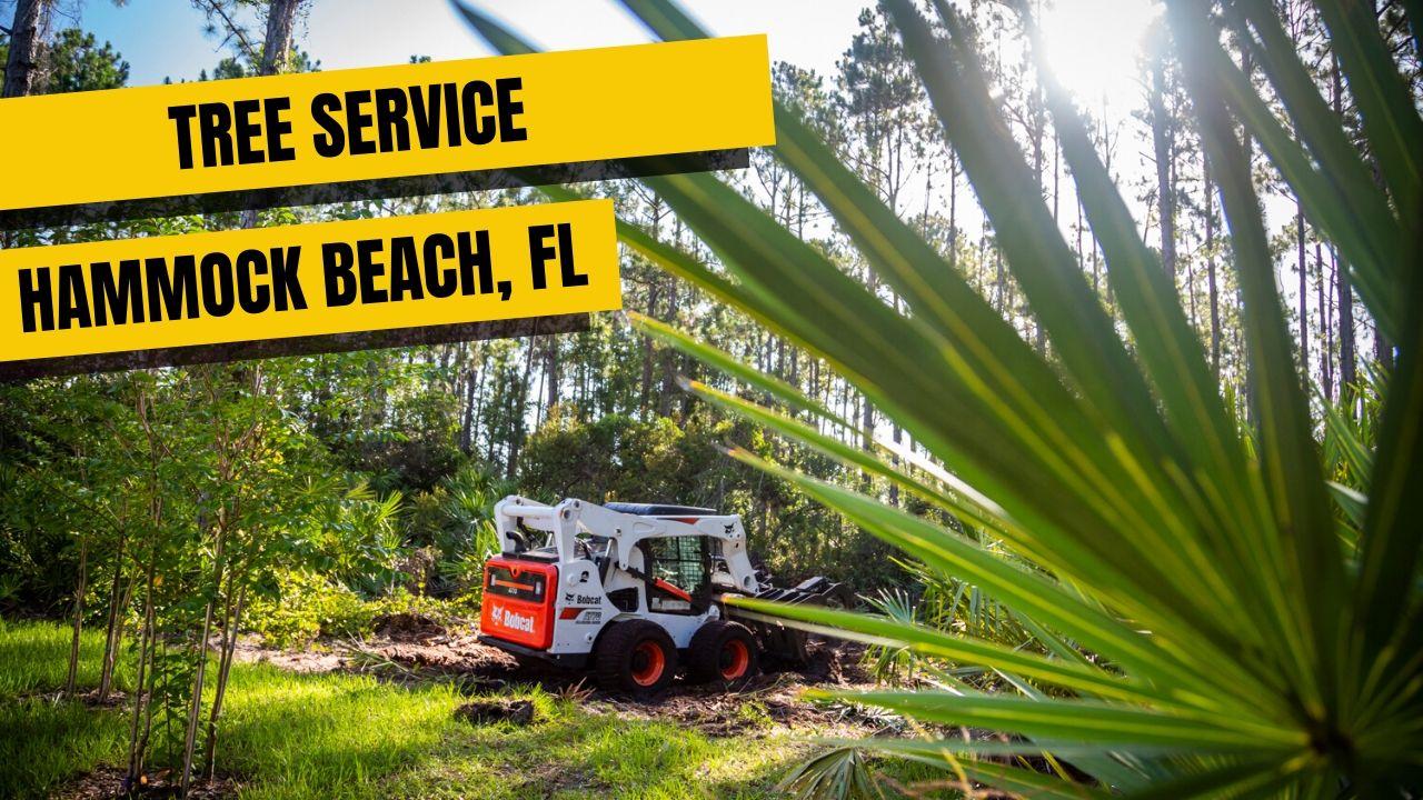 Tree Service In Hammock Beach, FL