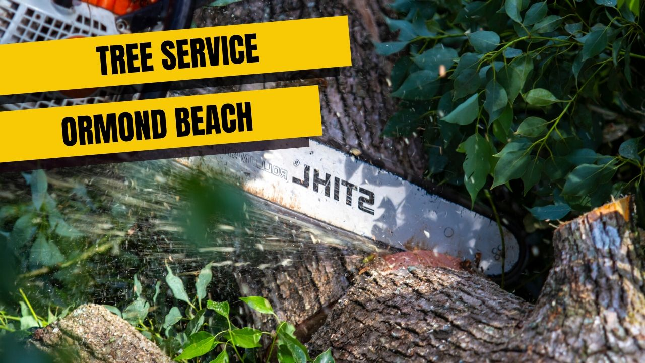 Tree Service In Ormond Beach