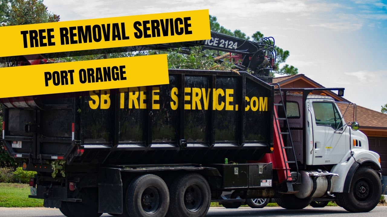 Tree removal service Port Orange