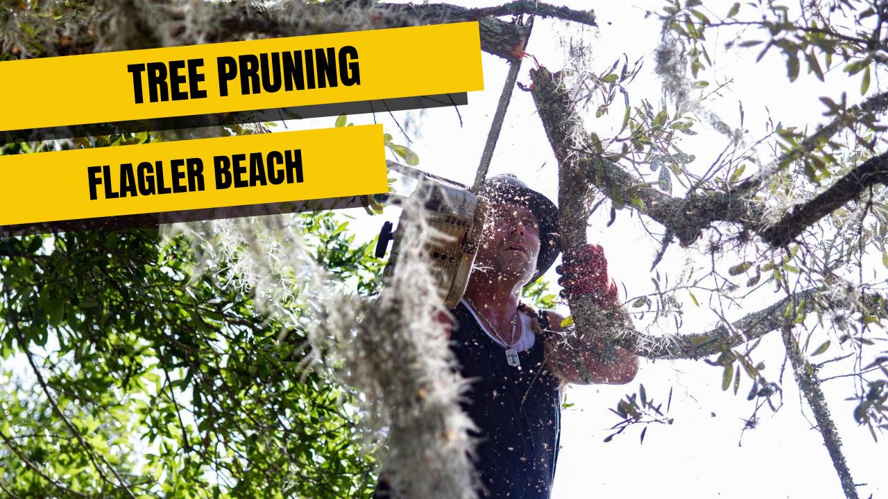 Tree Pruning in Flagler Beach