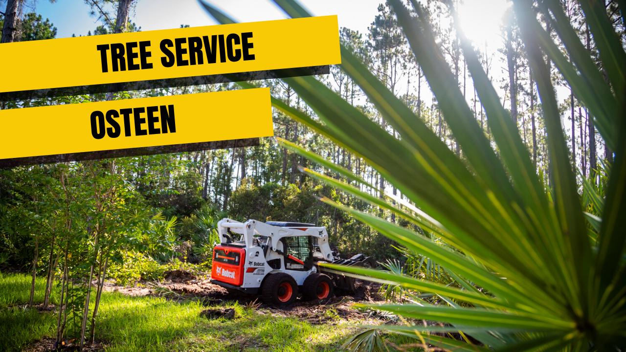 Tree Service In Osteen, Fl
