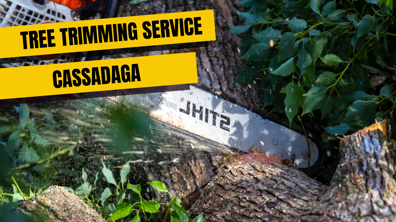 Tree Trimming Service in Cassadaga