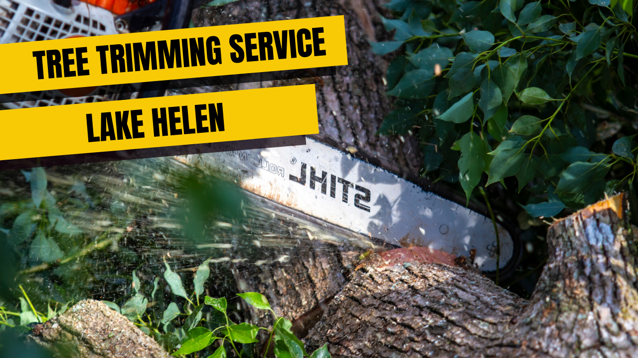 Tree Trimming Service in Lake Helen