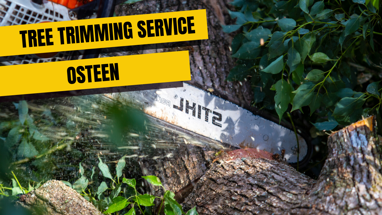 Tree Trimming Service in Osteen