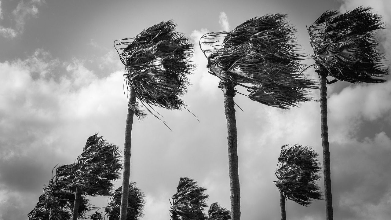 Hurricane Preparation for Your Trees