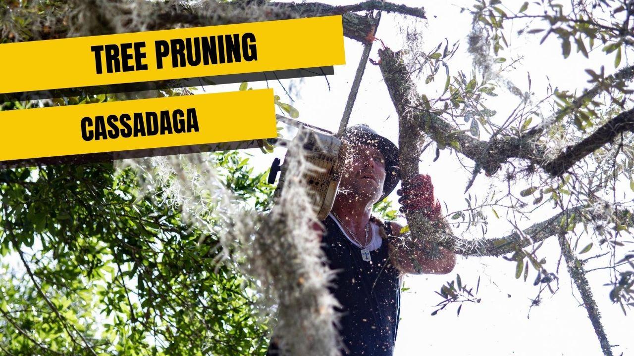 Tree Pruning In Cassadaga