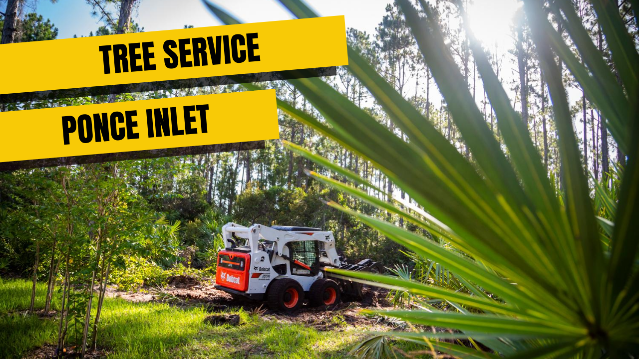 Tree Service in Ponce Inlet