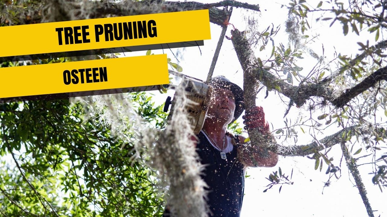 tree pruning in Osteen