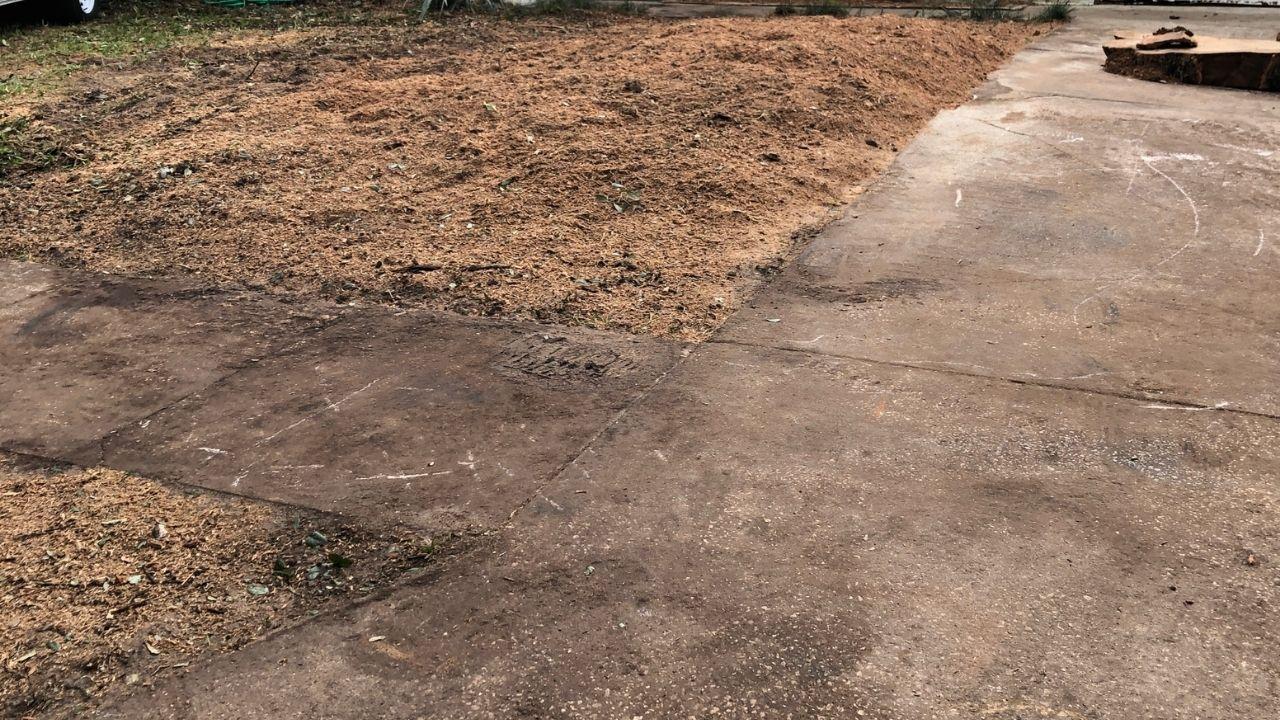 Daytona Beach Stump Grinding
