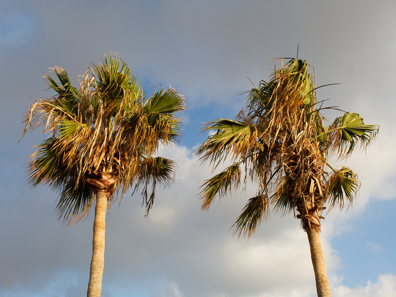 """Tree Diseases: The Three Biggest Culprits In Florida Trees"""