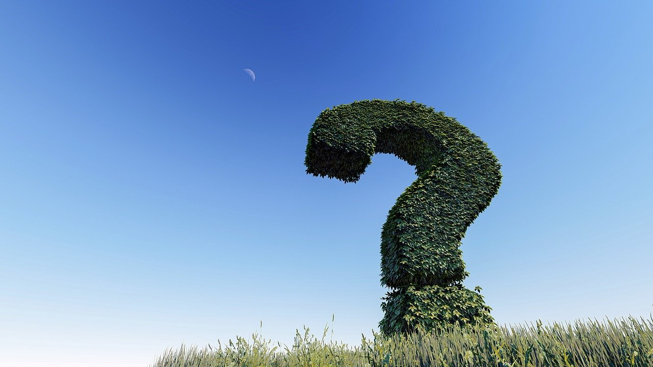 Four Tree Service Questions To Ask Before Hiring A New Team