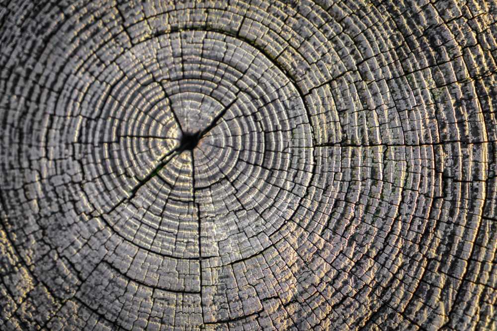 How to Perfect Your Yard After Stump Grinding